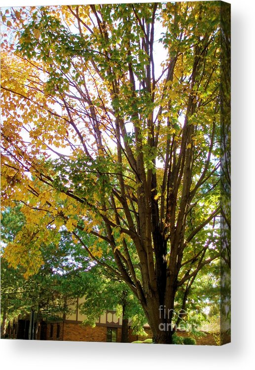 Tree Acrylic Print featuring the photograph Side Of The Street by Tahlula Arts