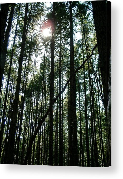 Tree Acrylic Print featuring the photograph Solitude by Mike Hinton