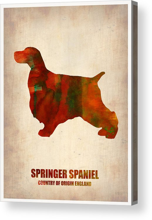 Springer Spaniel Acrylic Print featuring the painting Springer Spaniel Poster by Naxart Studio