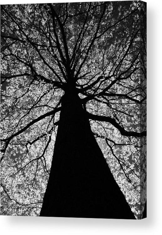 Tree Acrylic Print featuring the photograph Static Tree by Greg Kear