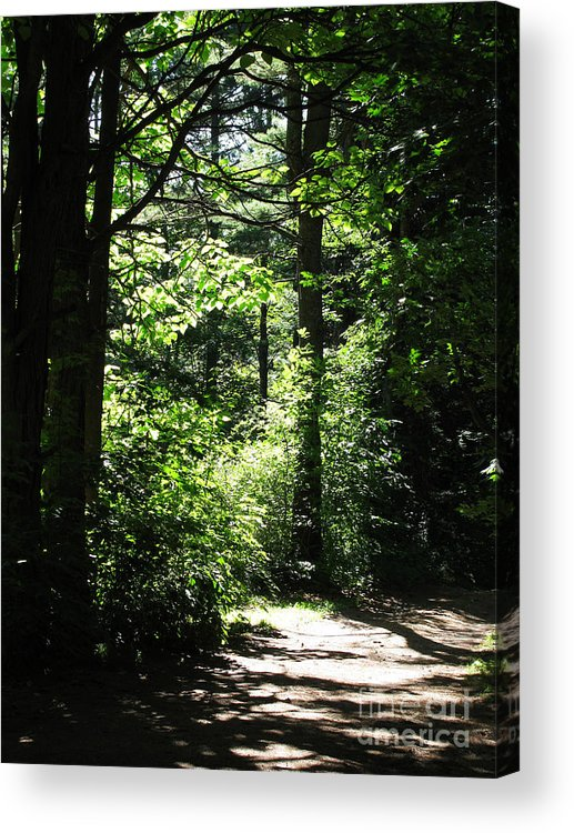 Leaves Acrylic Print featuring the photograph Summer Sunlight by Nancie Johnson