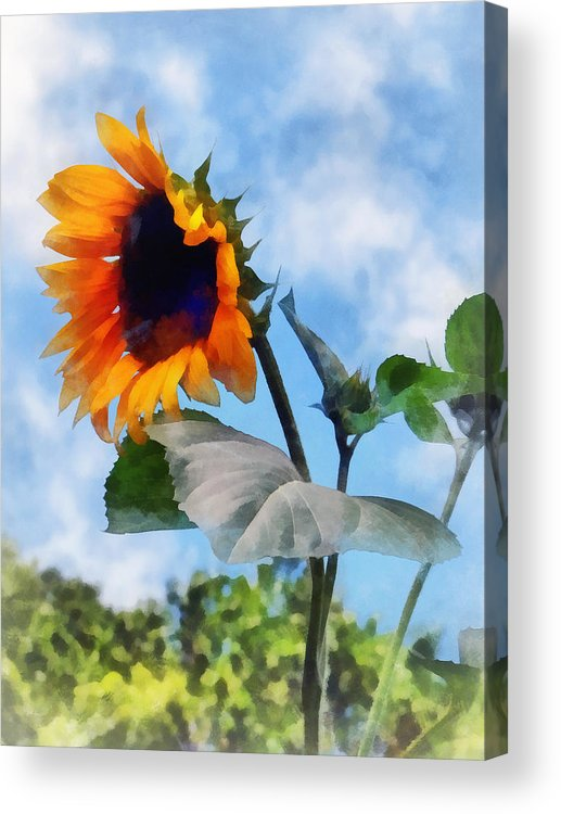 Sunflower Acrylic Print featuring the photograph Sunflower Against The Sky by Susan Savad