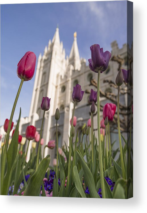 Temple Tulips Acrylic Print featuring the photograph Temple Tulips by Chad Dutson