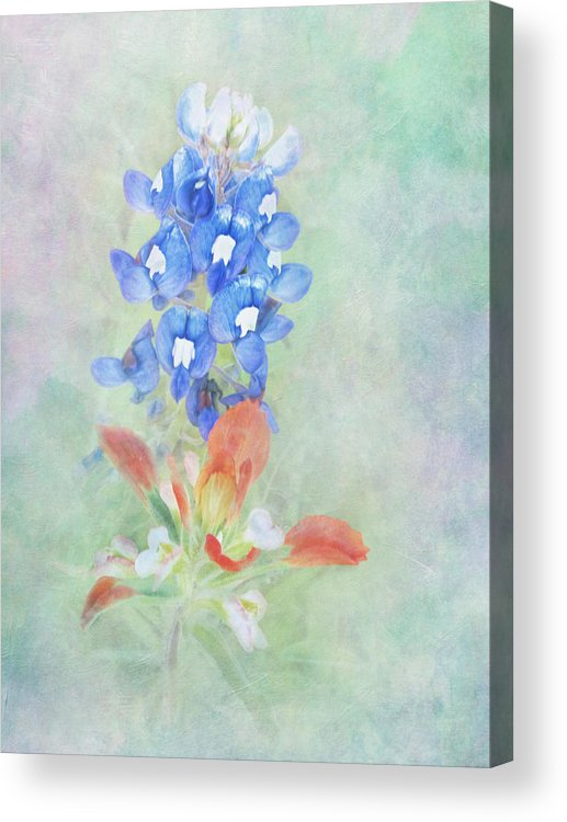 Bloom Acrylic Print featuring the photograph Texas Bluebonnet And Indian Paintbrush by David and Carol Kelly