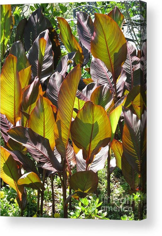Leaf Acrylic Print featuring the photograph The Exotic by Tanya Shockman
