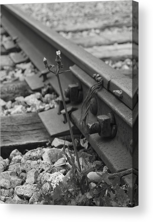 Weed Acrylic Print featuring the photograph The Tenacity Of Nature Greyscale by MM Anderson