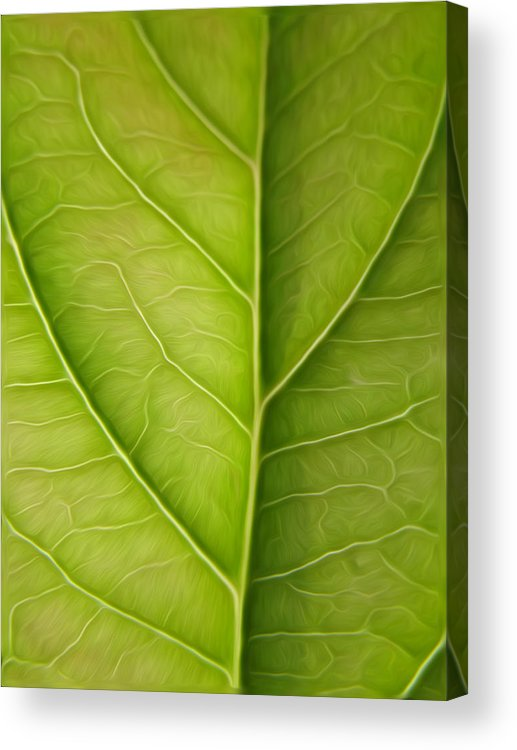 Tree Leaf Acrylic Print featuring the pyrography Tree Leaf by Stefan Petrovici