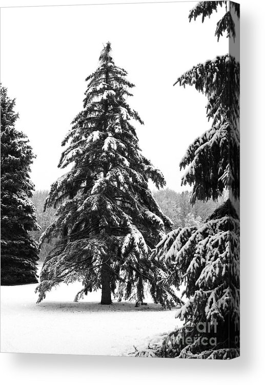 Winter Acrylic Print featuring the photograph Winter Pines by Ann Horn