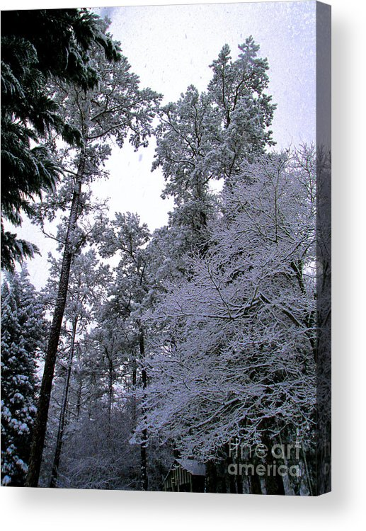 Winter Acrylic Print featuring the photograph Winter Surprise by Silvie Kendall