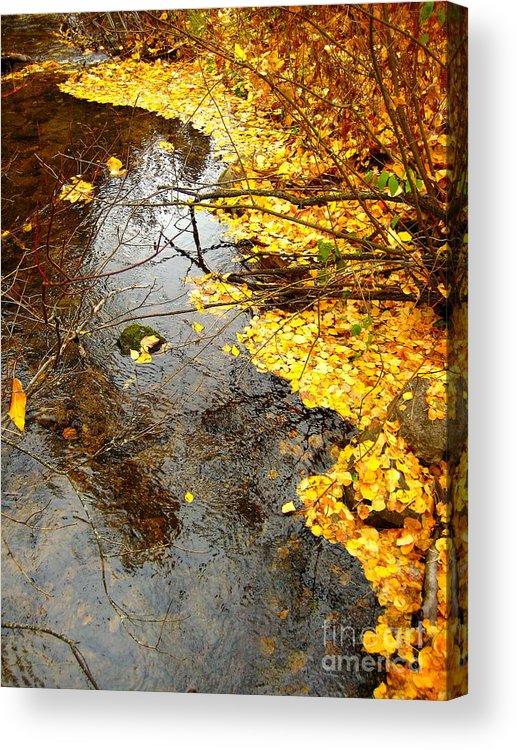 Autumn Acrylic Print featuring the photograph Autumn Collage by Kathy Bassett