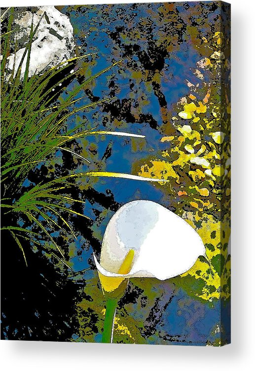 Floral Acrylic Print featuring the photograph Calla Lily 7 by Pamela Cooper