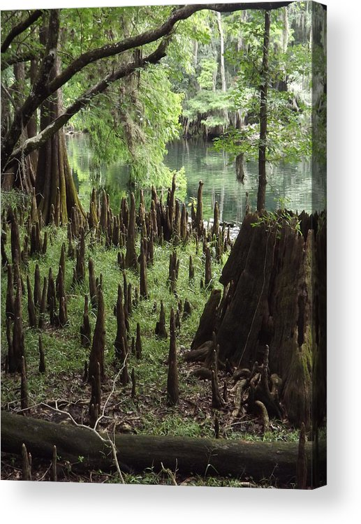 Landscape Acrylic Print featuring the photograph Cypress Stumps by Pamela Stanford