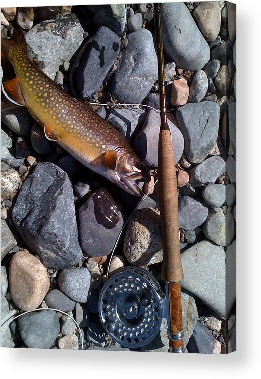 Flyfishing Acrylic Print featuring the photograph Fish Out Of Water by Robert Evans