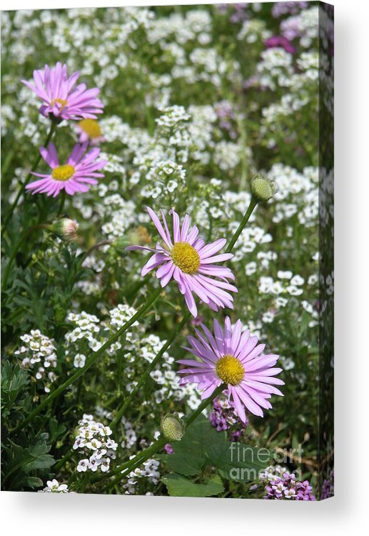 Posted Acrylic Print featuring the photograph Four Purps by Jack Norton