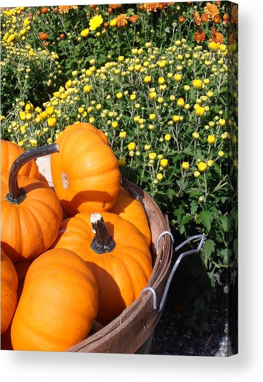Pumpkins Acrylic Print featuring the photograph Mini Pumpkins by Kimberly Perry