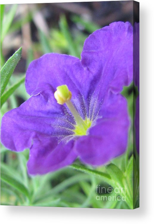 Flower Acrylic Print featuring the photograph Outstanding Photography by Tina Marie