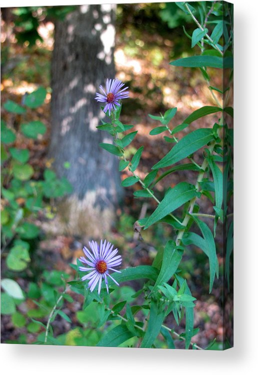 Park Acrylic Print featuring the photograph Paradise Springs Flowers 1 by Anita Burgermeister