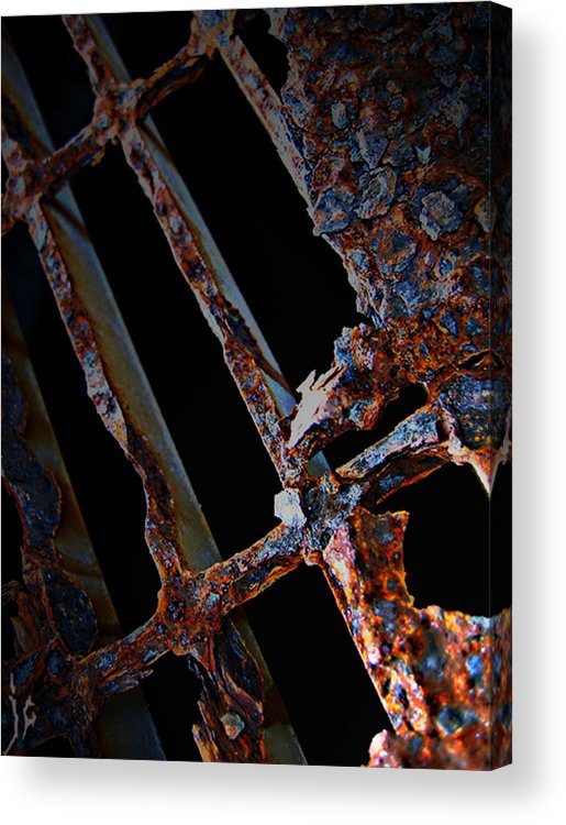 Elm Acrylic Print featuring the photograph Rat In The Cage by The Artist Project