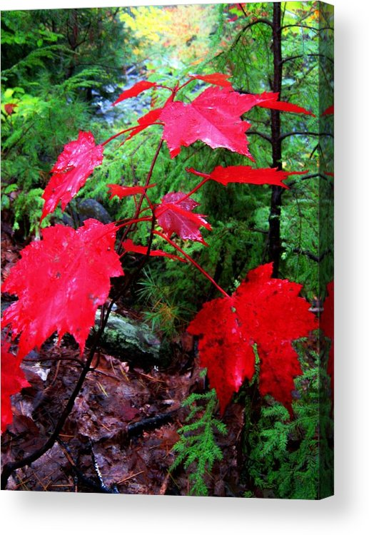 Red Acrylic Print featuring the photograph Red Leaves by Wayne Toutaint