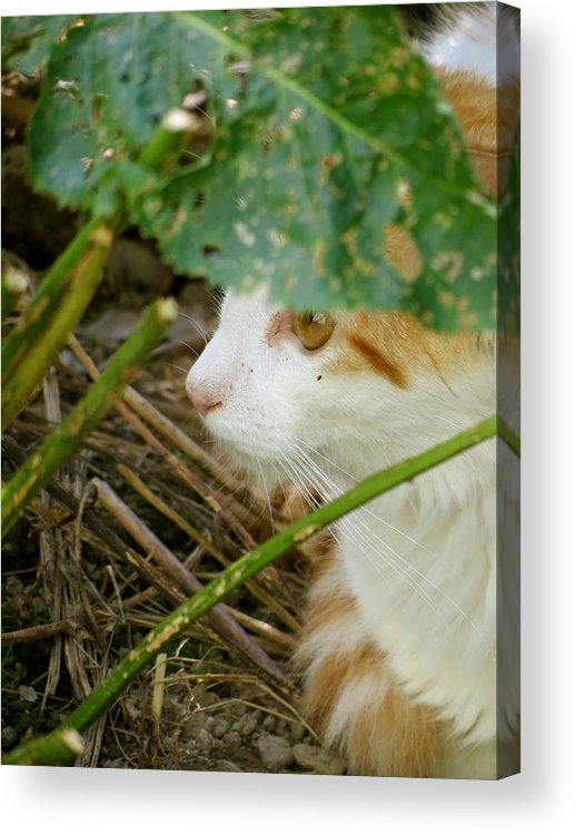 Cat Acrylic Print featuring the photograph Secluded by Azthet Photography