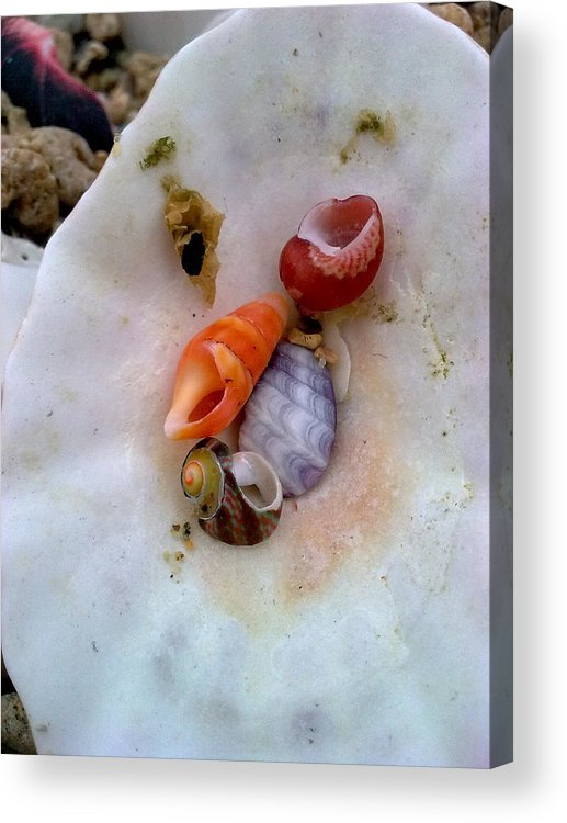 Shells Acrylic Print featuring the photograph Shells In A Shell by Jeannine Davidoff