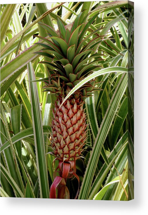 Pineapple Acrylic Print featuring the photograph Simply Golden by Trisha Paul