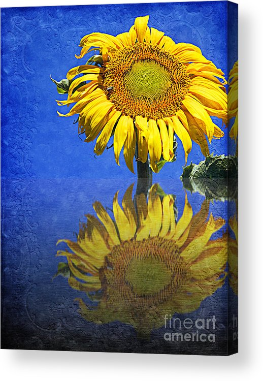 Sunflower Acrylic Print featuring the photograph Sunflower Reflection by Andee Design