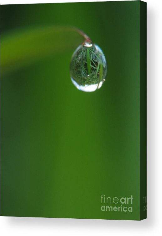 Animal Acrylic Print featuring the photograph The Drop by Odon Czintos