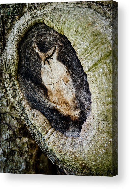 Abstract Acrylic Print featuring the photograph The Owl In The Tree by Mike Rivera