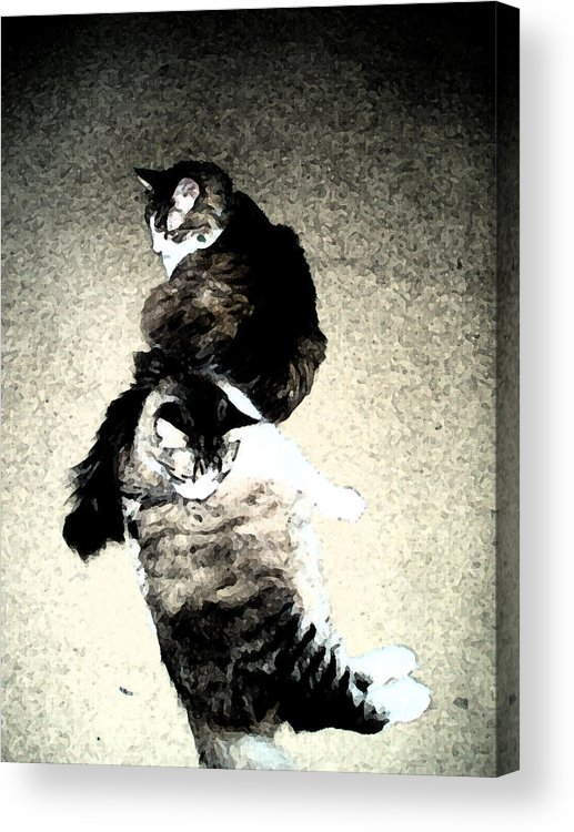 Cat Acrylic Print featuring the digital art The Twins by Eric Forster