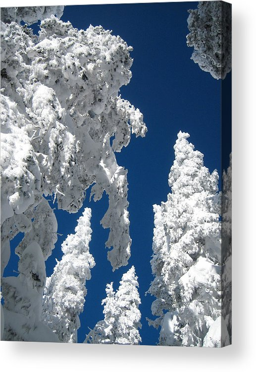 Snow Acrylic Print featuring the photograph Things Are Looking Up by George Crawford