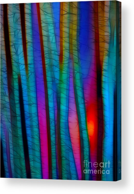 Trees Acrylic Print featuring the photograph Through The Trees by Judi Bagwell