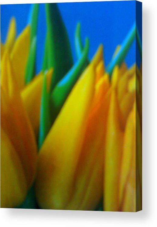 Tiptoe Thru Tulips Acrylic Print featuring the photograph Tiptoe Thru Tulips by Douglass Reynolds