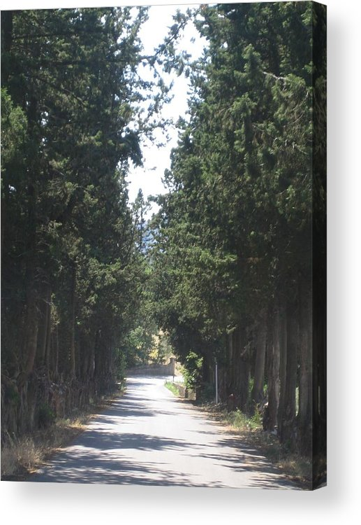 Tree Acrylic Print featuring the photograph Tree Lined Street by Angela Rose