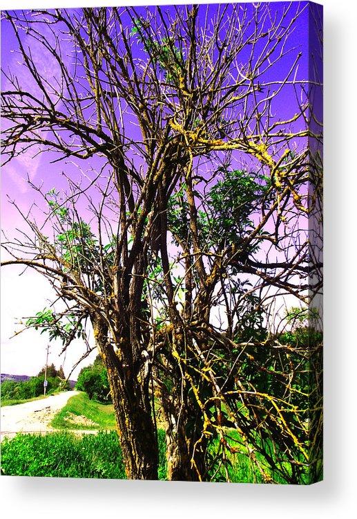 Tree Acrylic Print featuring the photograph Tree by Vasil Georgiev