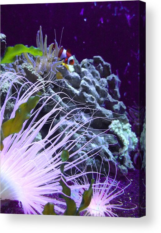 Underwater Acrylic Print featuring the photograph Undersea World by Robin Cox
