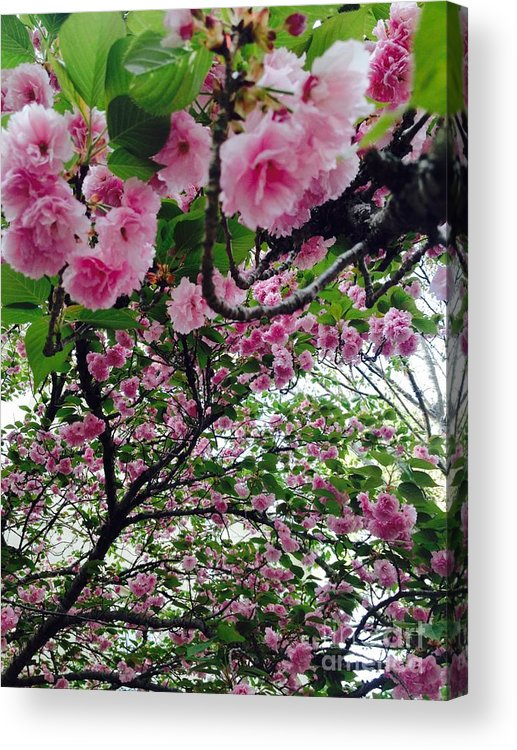 Pink Acrylic Print featuring the photograph 09032015056 by Debbie L Foreman