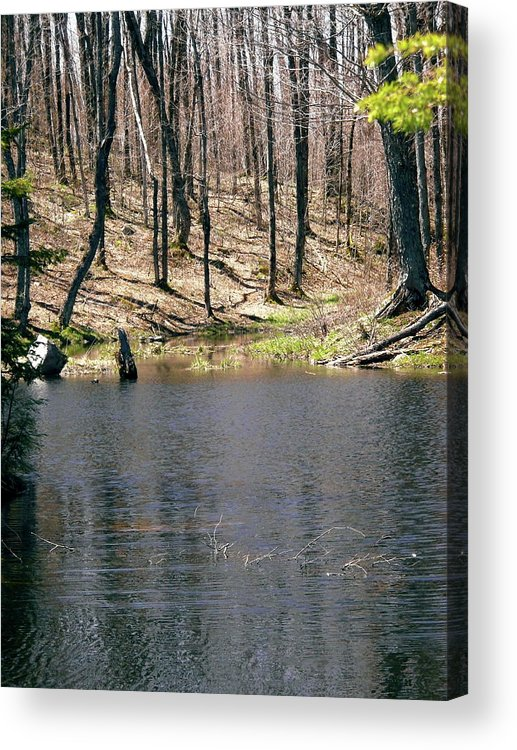 Water Acrylic Print featuring the photograph Beaver Pond by Stephanie Moore