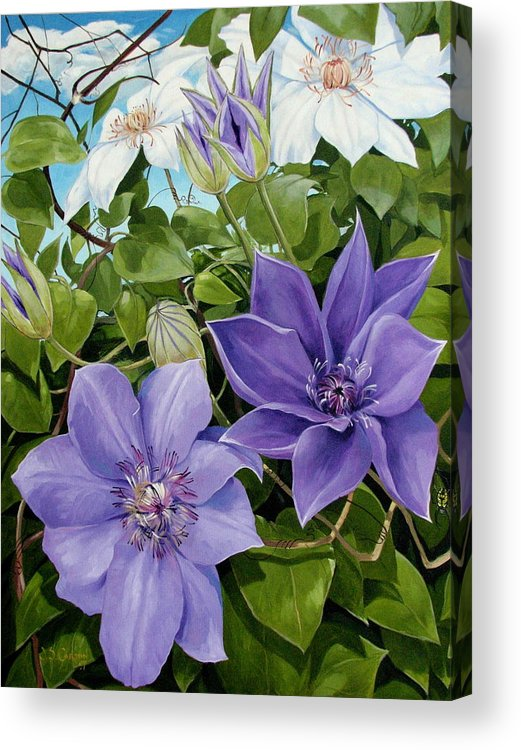 Clematis Acrylic Print featuring the painting Clematis 2 by Jerrold Carton