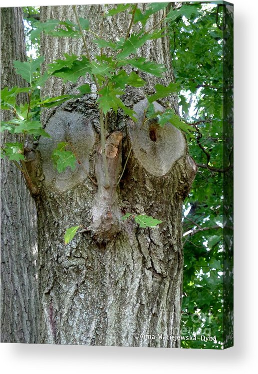 Nature Photography Acrylic Print featuring the painting Trees I Love 13 One Who Watches by Anna Folkartanna Maciejewska-Dyba