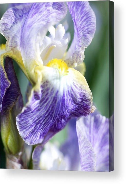 Genus Iris Acrylic Print featuring the photograph Iris Flowers by Tony Cordoza