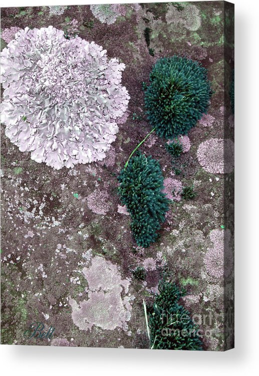 Lichen Acrylic Print featuring the photograph Abstract Lichen by Christine Belt