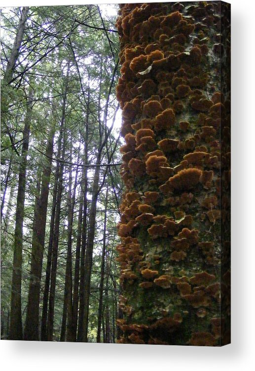 Fungus Acrylic Print featuring the photograph After The Rain by Alison Heckard