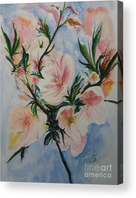 Flowers Acrylic Print featuring the painting Almond Blossom by Lizzy Forrester