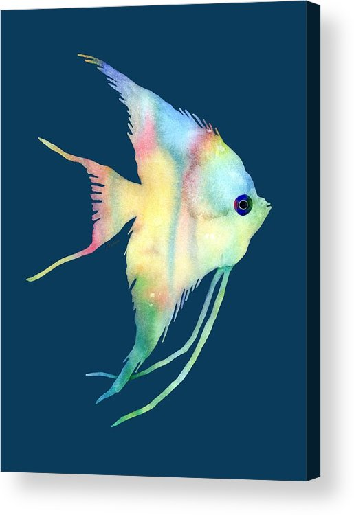 Fish Acrylic Print featuring the painting Angelfish I - Solid Background by Hailey E Herrera