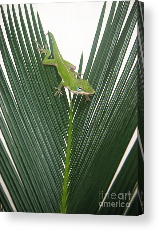 Nature Acrylic Print featuring the photograph Anole With Palm - Assertive by Lucyna A M Green