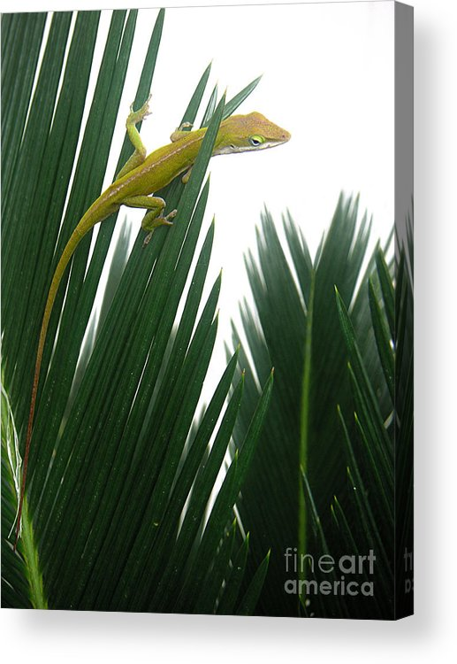 Nature Acrylic Print featuring the photograph Anole With Palm - Flexible by Lucyna A M Green
