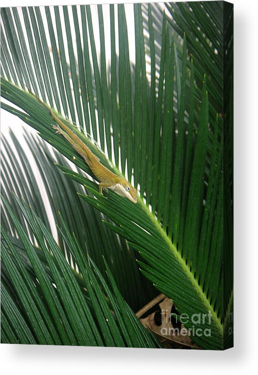Nature Acrylic Print featuring the photograph Anole With Palm - Inquisitive by Lucyna A M Green