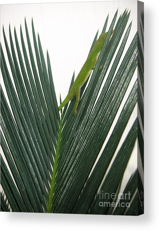 Nature Acrylic Print featuring the photograph Anole With Palm - Shy by Lucyna A M Green