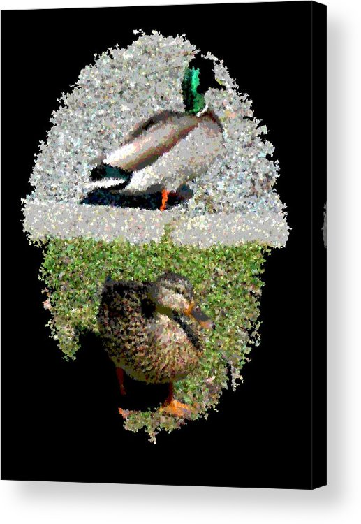 Arboretum Acrylic Print featuring the digital art Arboretum Quackers by Tim Allen